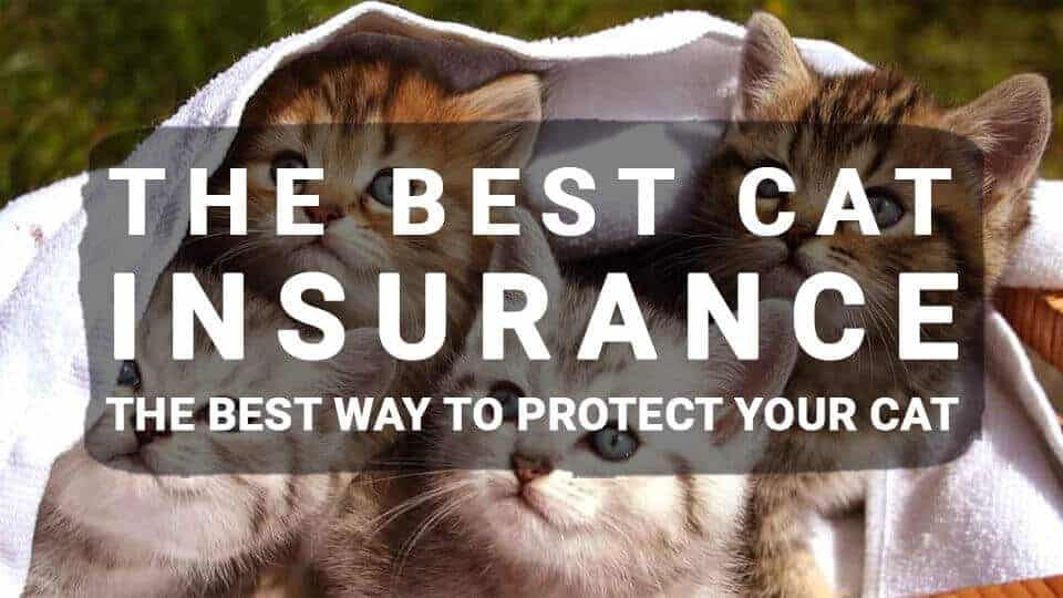 The Best Cat Insurance: The Best Way To Protect Your Cat