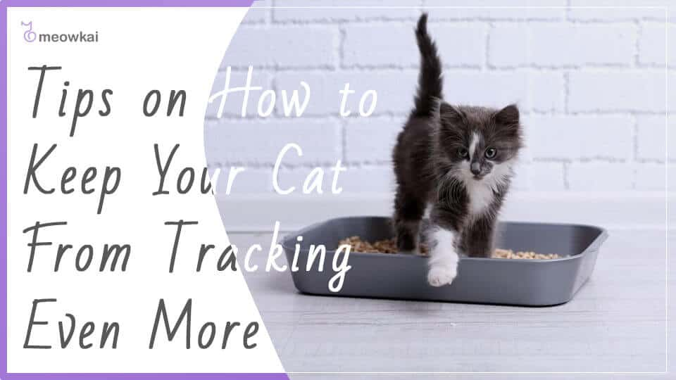 Tips-on-How-to-Keep-Your-Cat-From-Tracking-Even-More