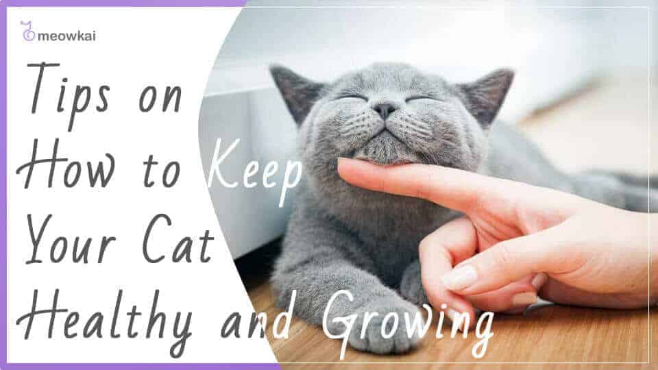 Tips-on-How-to-Keep-Your-Cat-Healthy-and-Growing