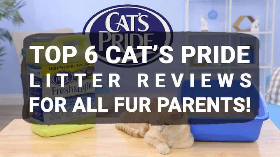 Top-6-Cats-Pride-Litter