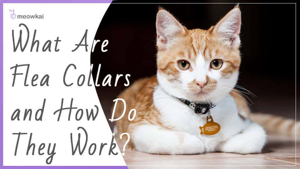 What-Are-Flea-Collars-and-How-Do-They-Work