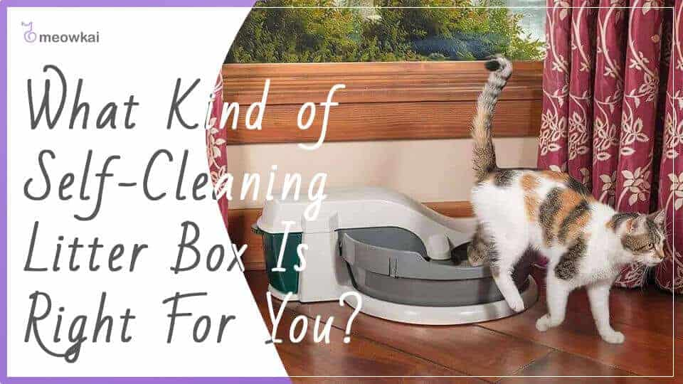 What-Kind-of-Self-Cleaning-Litter-Box-Is-Right-For-You