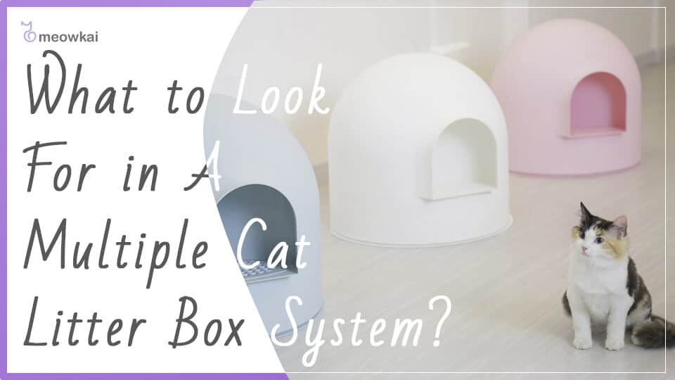 What-to-Look-For-in-A-Multiple-Cat-Litter-Box-System