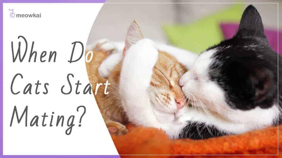 When-Do-Cats-Start-Mating