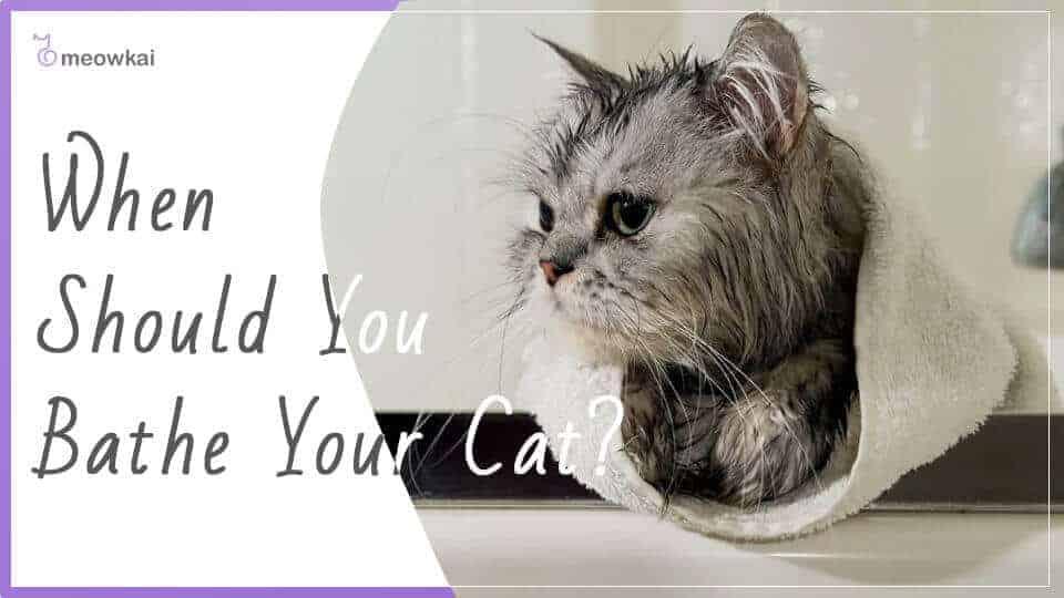 When-Should-You-Bathe-Your-Cat