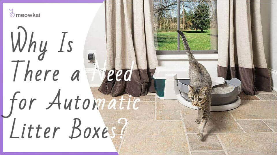 Why-Is-There-a-Need-for-Automatic-Litter-Boxes
