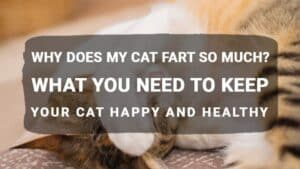 Why Does My Cat Fart So Much? What You Need to Keep Your Cat Happy and Healthy