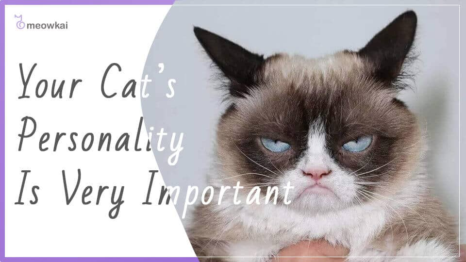 Your-Cats-Personality-Is-Very-Important
