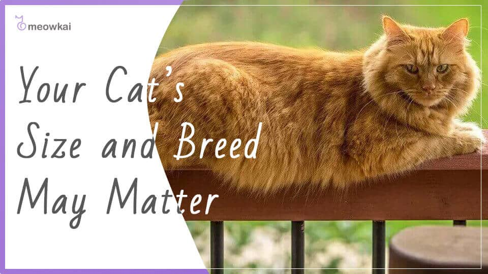 Your-Cats-Size-and-Breed-May-Matter