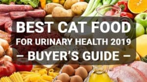 Best Cat Food For Urinary Health 2019 – Buyer's Guide