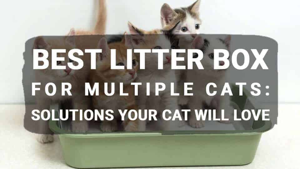 Best Litter Box for Multiple Cats: Solutions Your Cat will Love
