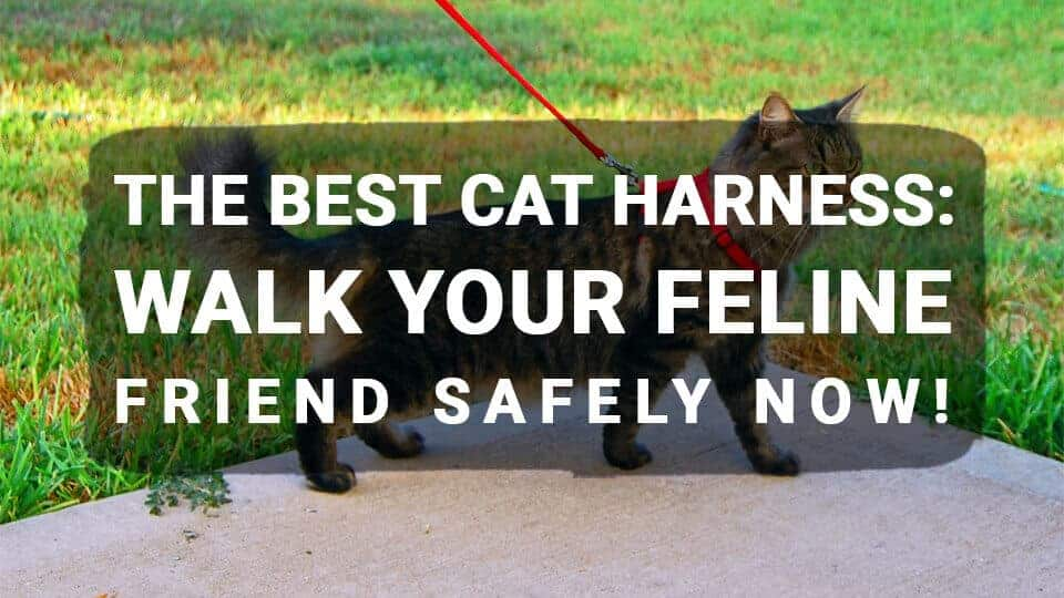 The Best Cat Harness: Walk Your Feline Friend Safely Now!