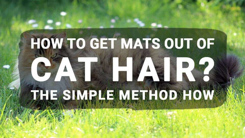 How to Get Mats Out of Cat Hair? The Simple Method How