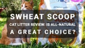 sWheat Scoop Cat Litter Review: Is All-Natural a Great Choice?