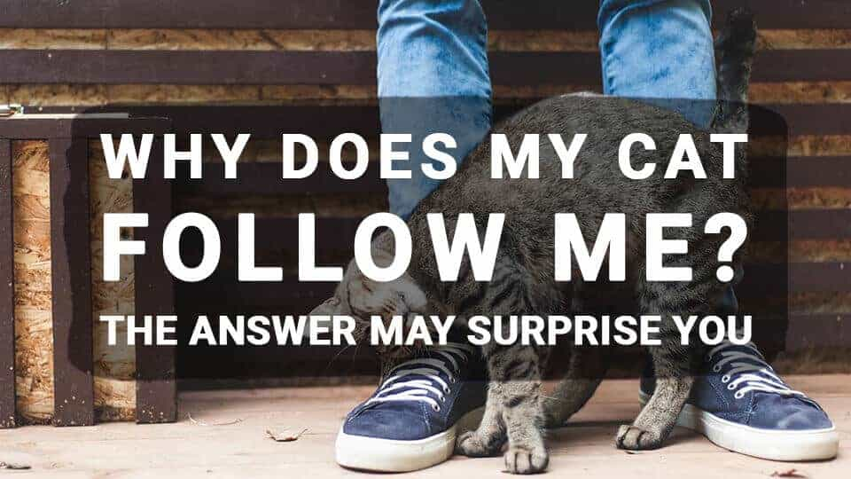 Why Does My Cat Follow Me? The Answer May Surprise You