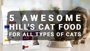 Read more about the article 5 Awesome Hill's Cat Food For All Types of Cats