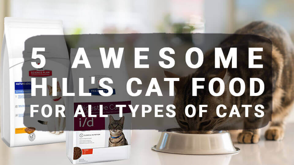 5 Awesome Hill's Cat Food For All Types of Cats