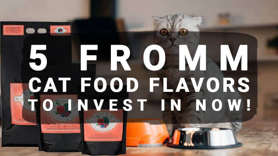You are currently viewing 5 Fromm Cat Food Flavors to Invest In Now!