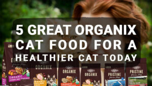 Read more about the article 5 Great Organix Cat Food For a Healthier Cat Today