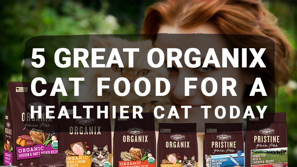 5 Great Organix Cat Food For a Healthier Cat Today