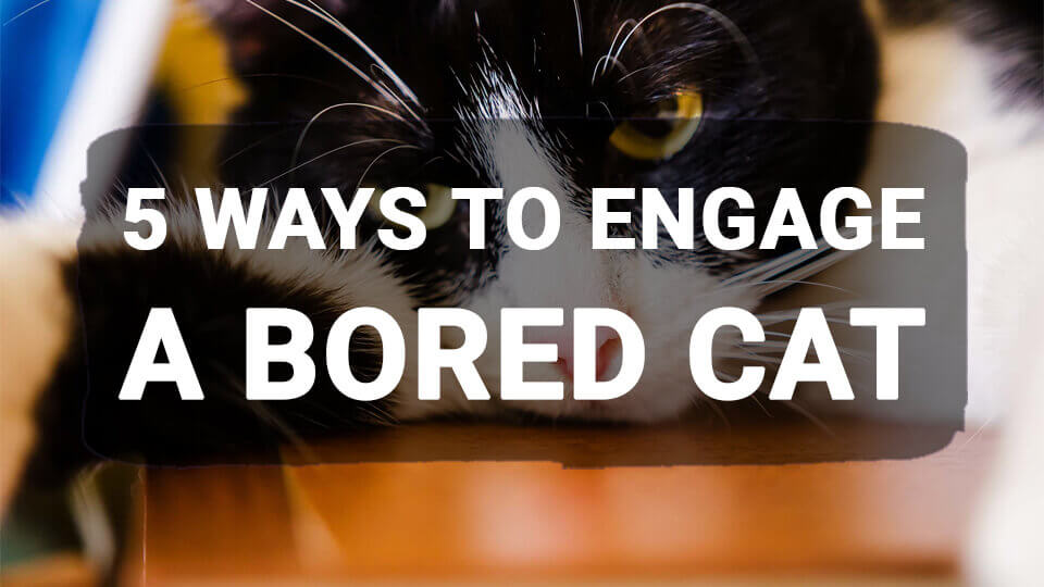 You are currently viewing 5 Ways to Engage a Bored Cat