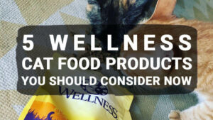 Read more about the article 5 Wellness Cat Food Products You Should Consider Now