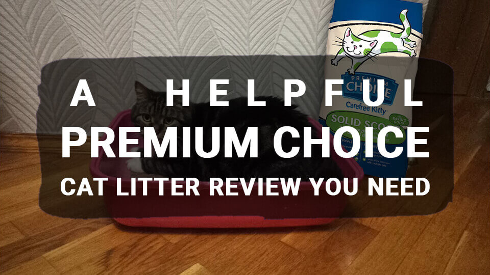 A Helpful Premium Choice Cat Litter Review You Need