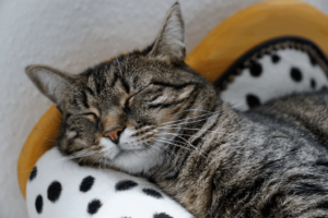 Read more about the article Are You Okay, Kitty? How to Tell If Your Cat Is Sick