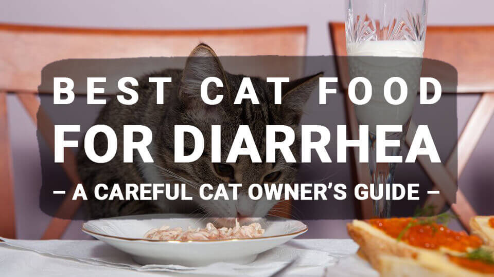 You are currently viewing Best Cat Food For Diarrhea – A Careful Cat Owner's Guide (Updated 2020)
