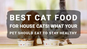 Read more about the article Best Cat Food for House Cats! What Your Pet Should Eat to Stay Healthy