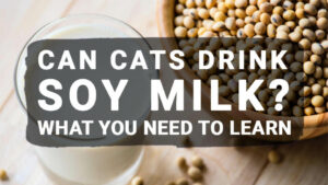 Read more about the article Can Cats Drink Soy Milk? What You Need to Learn