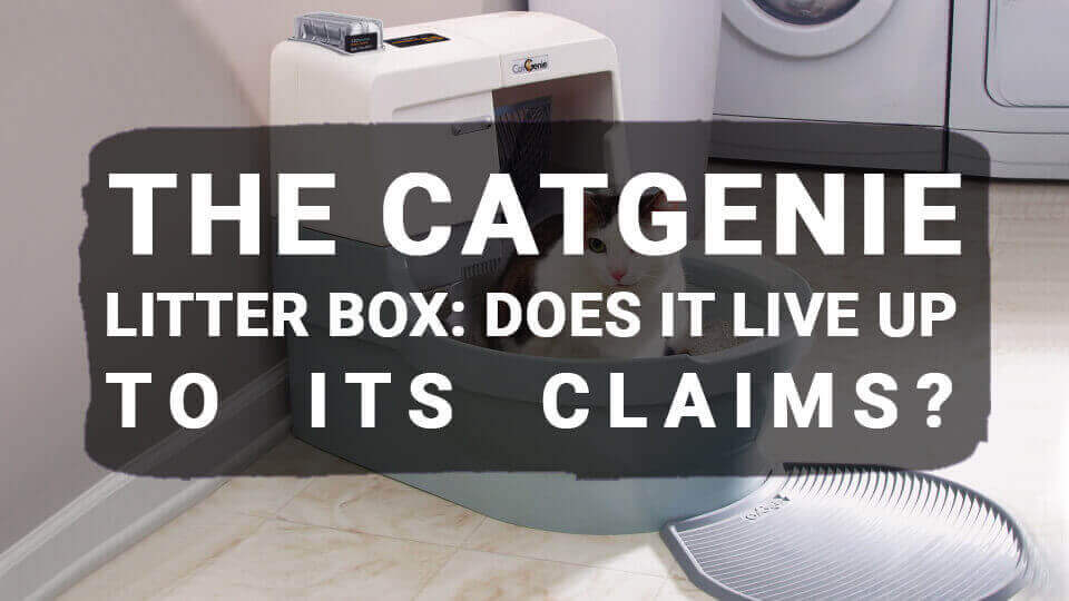The CatGenie Litter Box: Does It Live Up To Its Claims?
