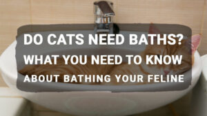 Read more about the article Do Cats Need Baths? What You Need to Know About Bathing Your Feline