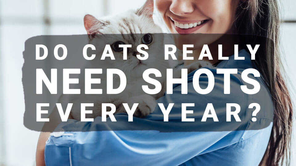 Vaccines for Cats: Do Cats Really Need Shots Every Year?