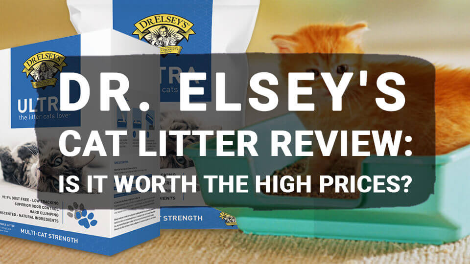 You are currently viewing Dr. Elsey's Cat Litter Review: Is It Worth the High Prices?