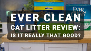 Read more about the article Ever Clean Cat Litter Review: Is It Really That Good?