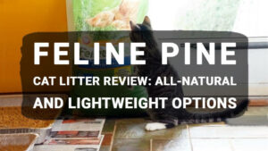 Read more about the article Feline Pine Cat Litter Review: All-Natural and Lightweight Options