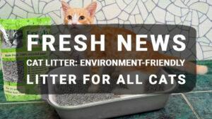 Fresh News Cat Litter: Environment-Friendly Litter For All Cats
