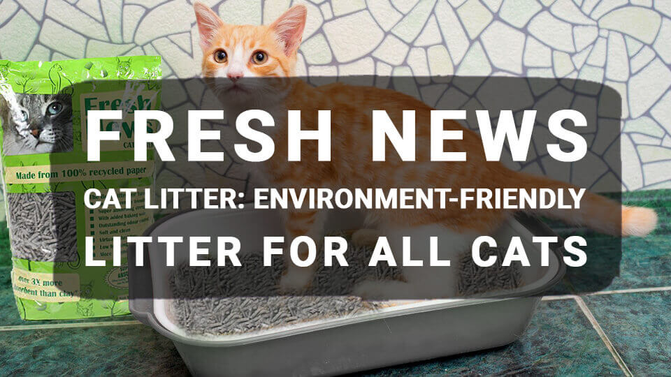 You are currently viewing Fresh News Cat Litter: Environment-Friendly Litter For All Cats