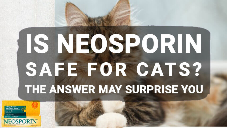 You are currently viewing Is Neosporin Safe for Cats? The Answer May Surprise You