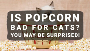 Read more about the article Is Popcorn Bad For Cats? You May Be Surprised!