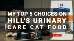 Read more about the article My Top 5 Choices on Hill's Urinary Care Cat Food