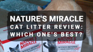 Read more about the article Nature's Miracle Cat Litter Review: Which One's Best?