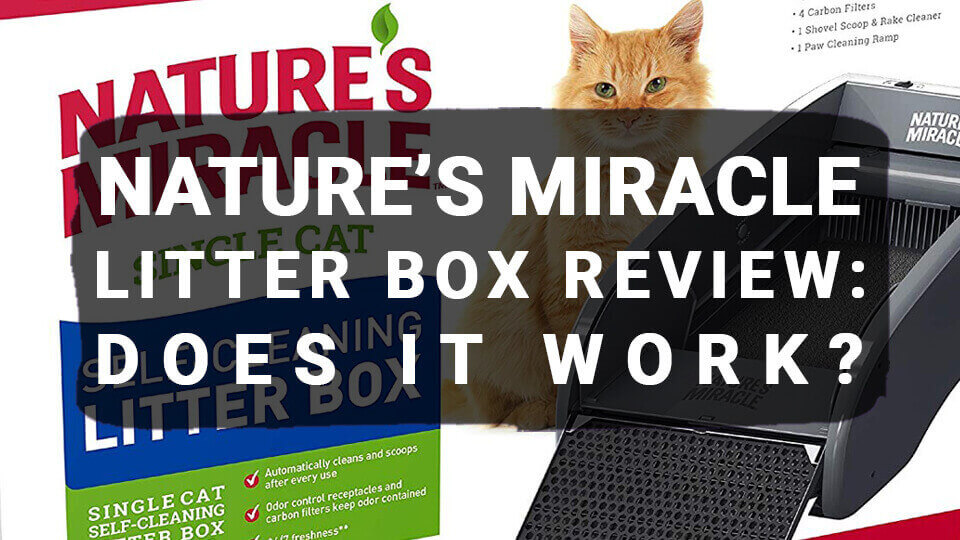 Nature's Miracle Litter Box Review: Does It Work?