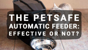 The Petsafe Automatic Feeder: Effective or Not?