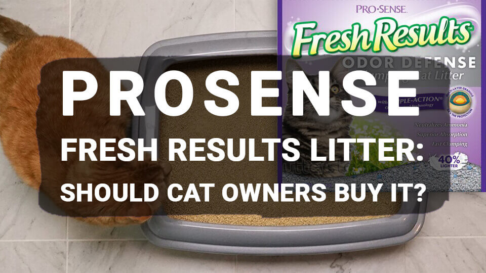 You are currently viewing ProSense Fresh Results Litter: Should Cat Owners Buy It?