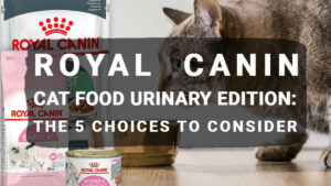 Read more about the article Royal Canin Cat Food Urinary Edition: The 5 Choices to Consider