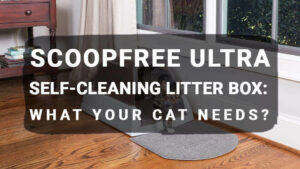 Read more about the article ScoopFree Ultra Self-Cleaning Litter Box: What Your Cat Needs?
