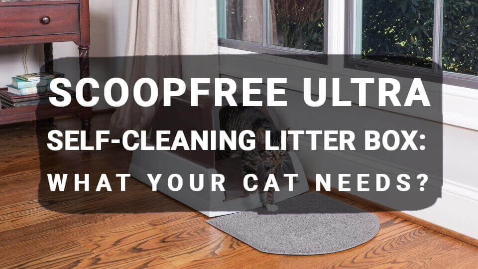 You are currently viewing ScoopFree Ultra Self-Cleaning Litter Box: What Your Cat Needs?