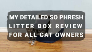 Read more about the article My Detailed So Phresh Litter Box Review For All Cat Owners
